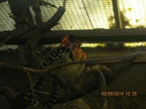 Vogelpark2